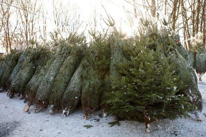 https://www.husmann-gartenbau.de/wp-content/uploads/2013/12/christbaum-verkauf-husmann-420x280.jpg