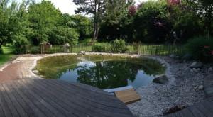 schwimmteich-eiben-fertig
