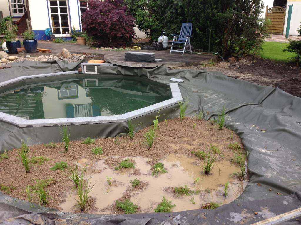 umbau eines pools zum schwimmteich husmann gartenbau. Black Bedroom Furniture Sets. Home Design Ideas