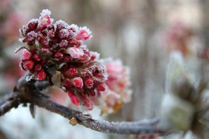 winterblueher-pflegen
