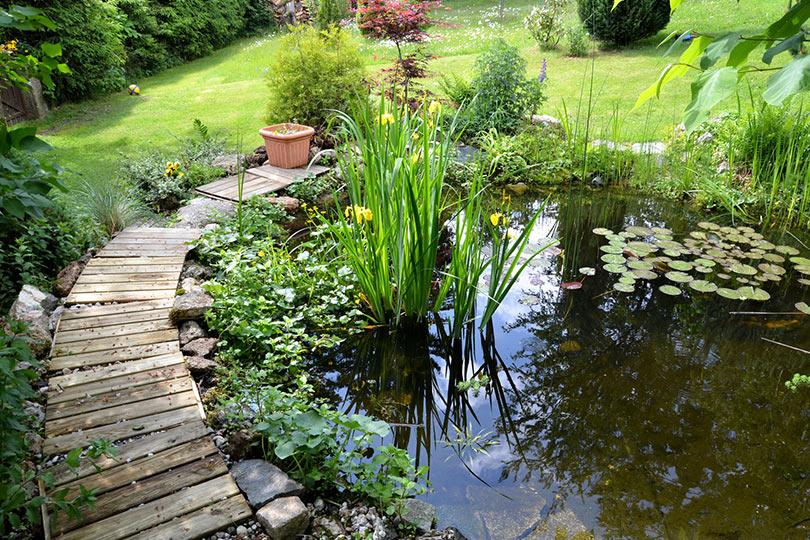 Geliebte Substrat für Ihren Teich – diese Materialien eignen sich @TS_99