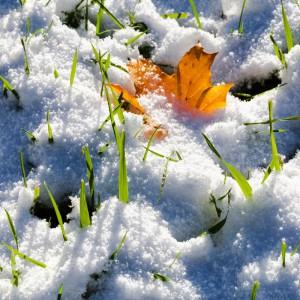 Schnee Garten 2
